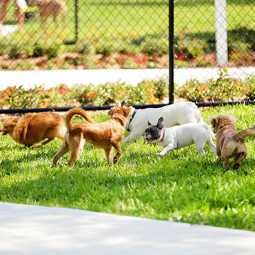 Large Dog Park at The Park at Southwood Apartments